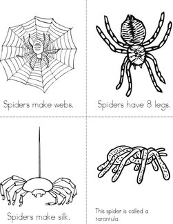 My Book About Spiders