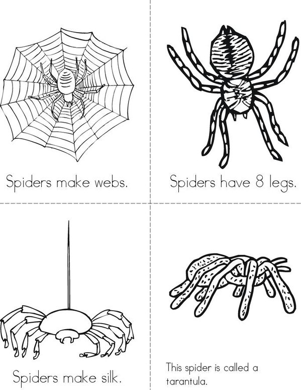 My Book About Spiders Mini Book - Sheet 1