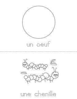 Le cycle de vie d'un papill Book