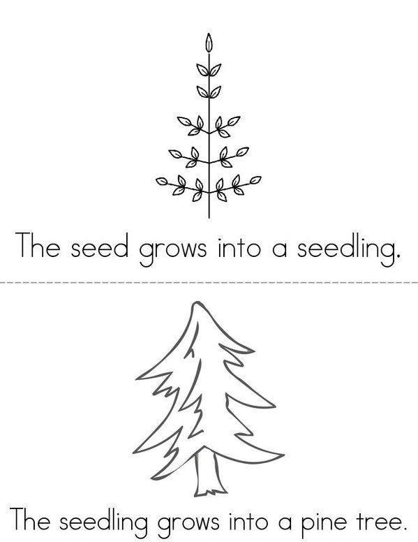 The Life Cycle of a Christmas Tree Mini Book - Sheet 2