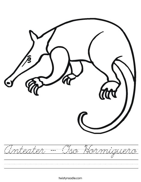 Anteater Worksheet