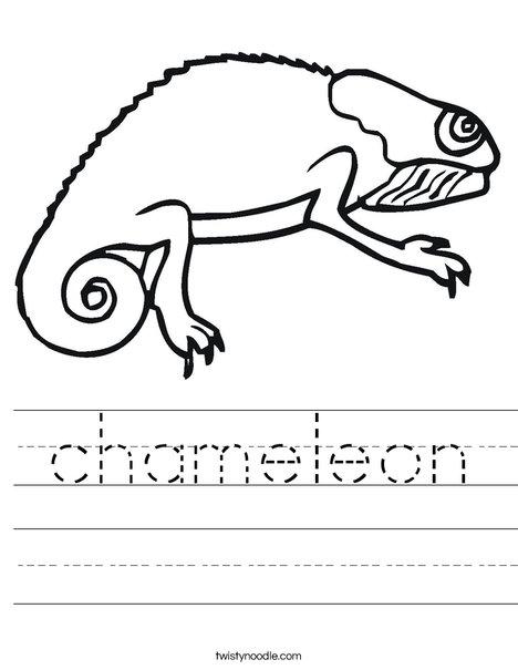 Bearded Dragon Worksheet