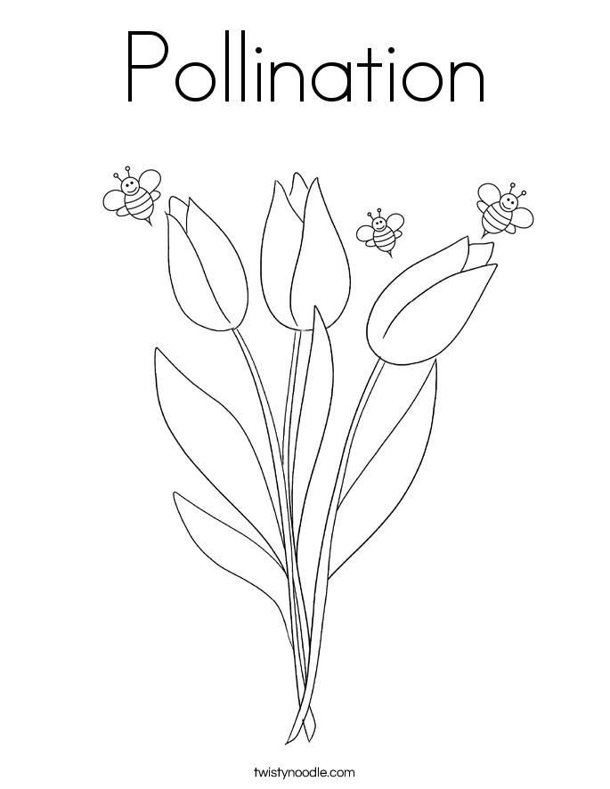 pollination partners