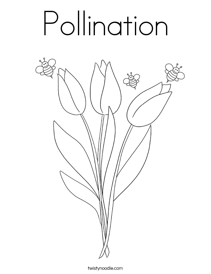 Pollination Coloring Page Twisty Noodle – Pollination Worksheet