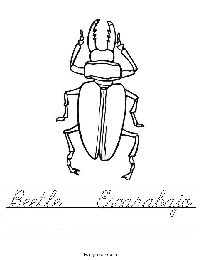 Beetle - Escarabajo Worksheet