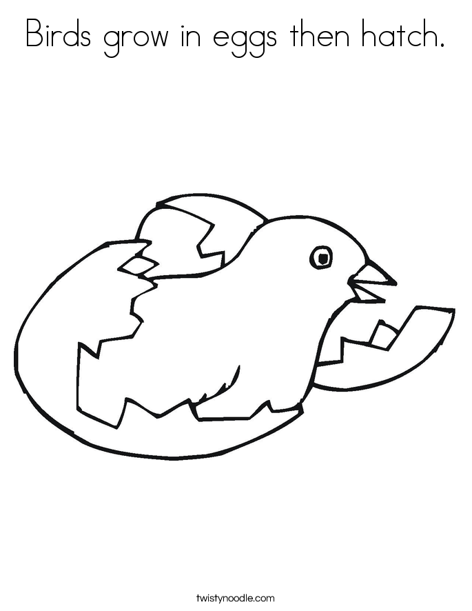 Birds grow in eggs then hatch. Coloring Page