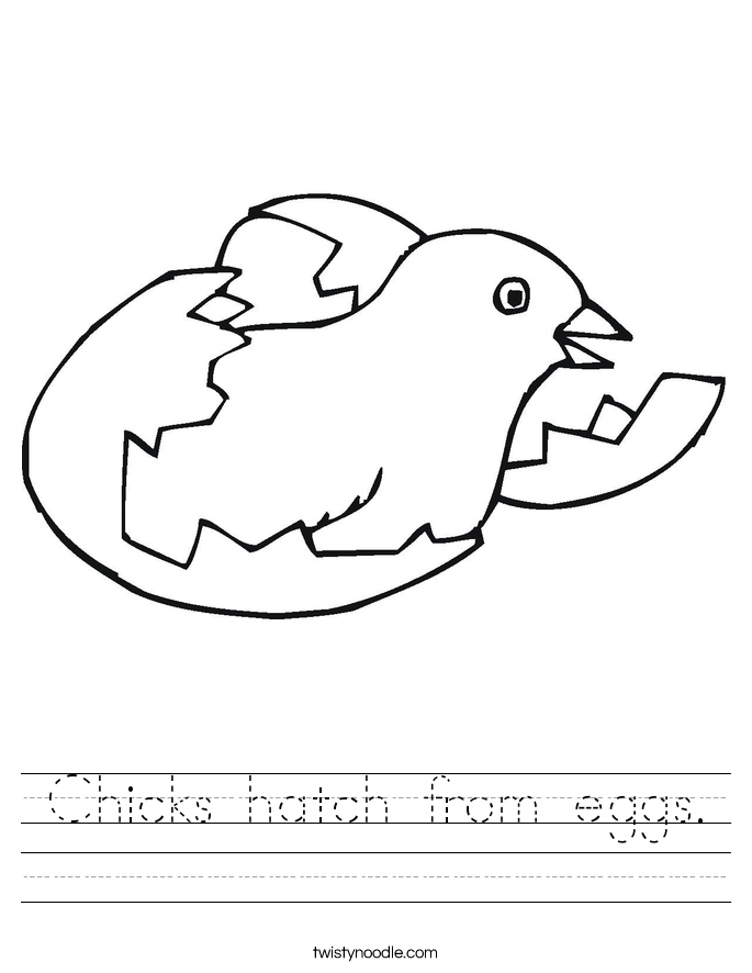 Chicks hatch from eggs. Worksheet