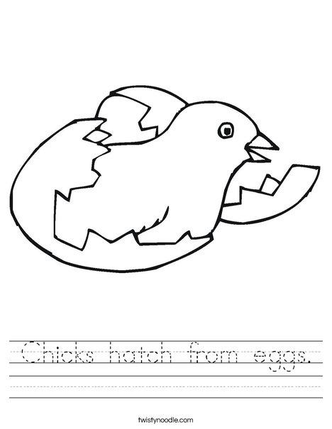 Bird Hatching Worksheet