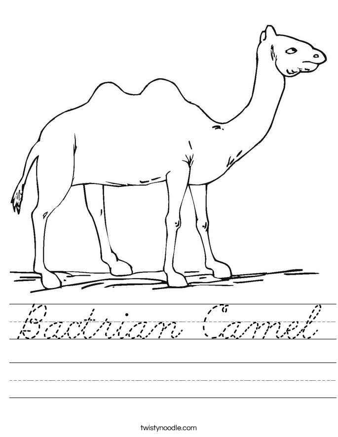 Bactrian Camel Worksheet