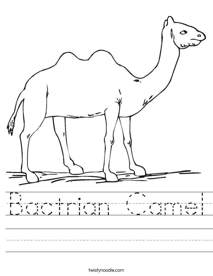 Bactrian Camel Worksheet