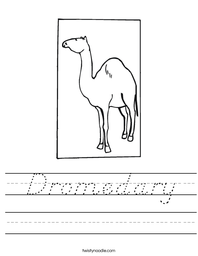 Dromedary Worksheet