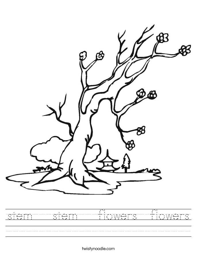 stem   stem   flowers  flowers Worksheet