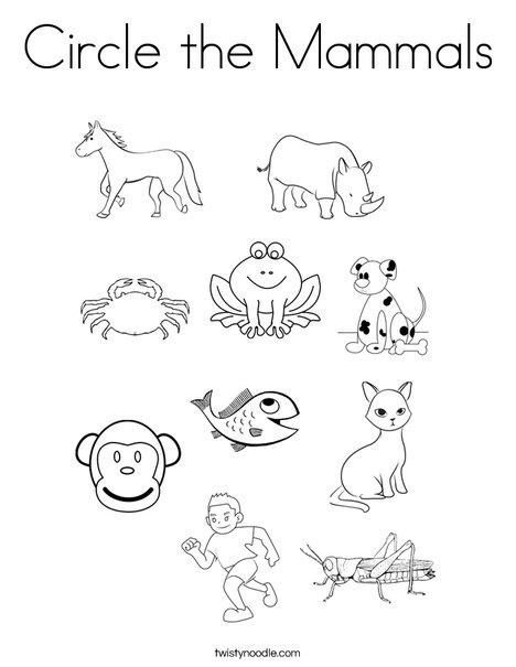 mammal coloring pages Circle the Mammals Coloring Page   Twisty Noodle mammal coloring pages