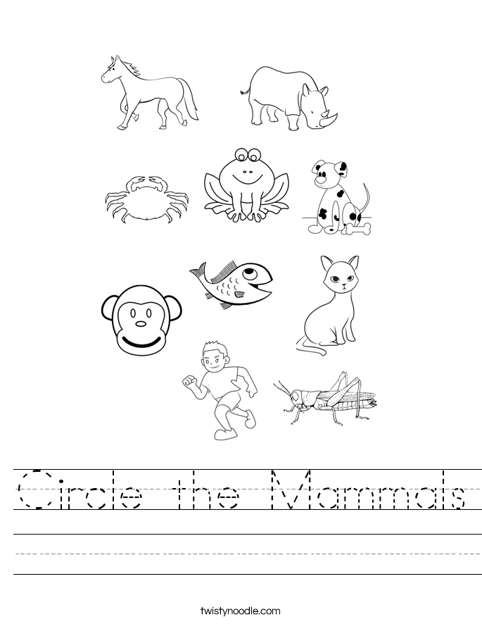 Circle the Mammals Worksheet Twisty Noodle – Mammals Worksheet