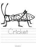 Cricket Worksheet