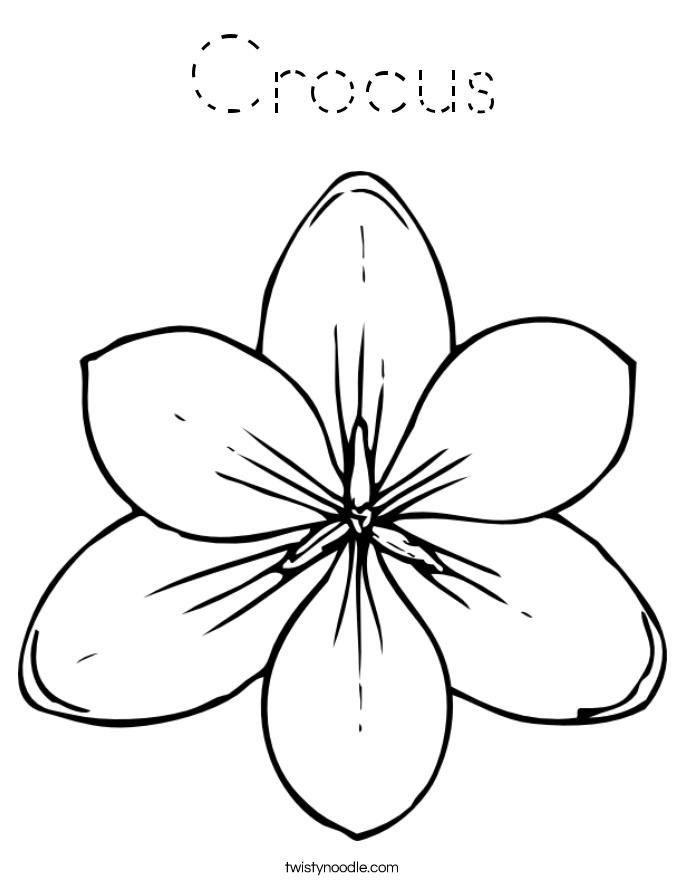 Crocus Coloring Page