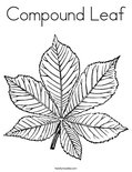 Compound Leaf Coloring Page