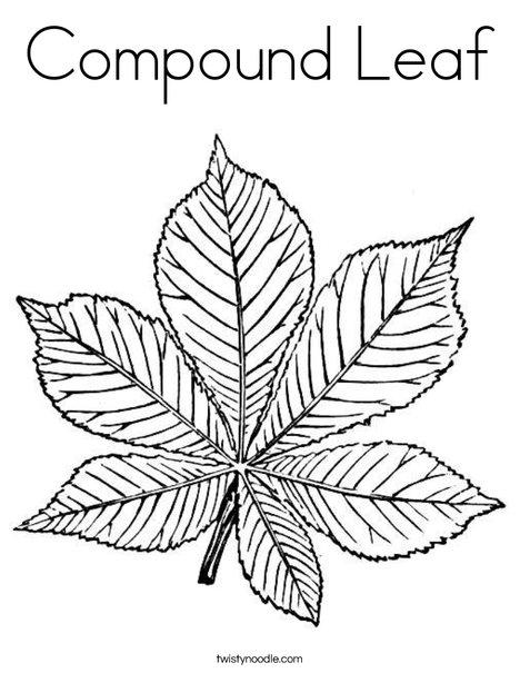 Compound Leaf Coloring Page Twisty Noodle