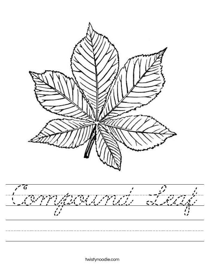 Compound Leaf Worksheet