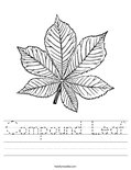 Compound Leaf Worksheet