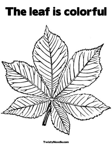 Free Tropical Palm Leaf Coloring Pages