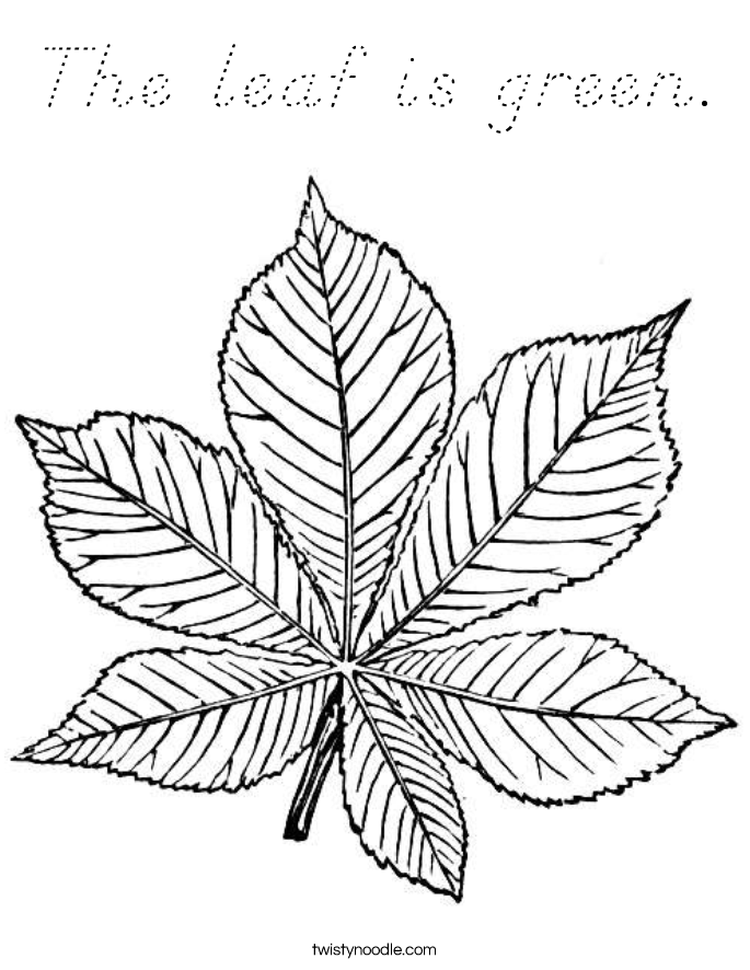 The leaf is green. Coloring Page