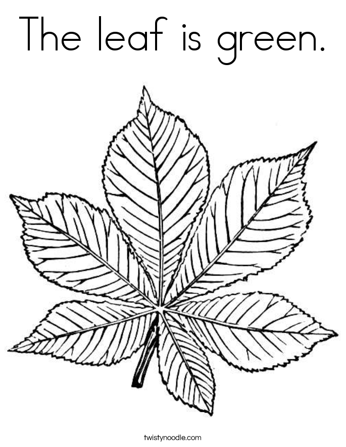 Leaf Coloring Pages  Twisty Noodle