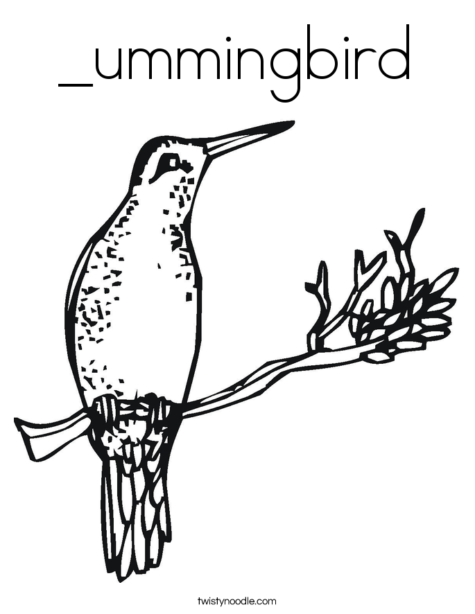 _ummingbird Coloring Page