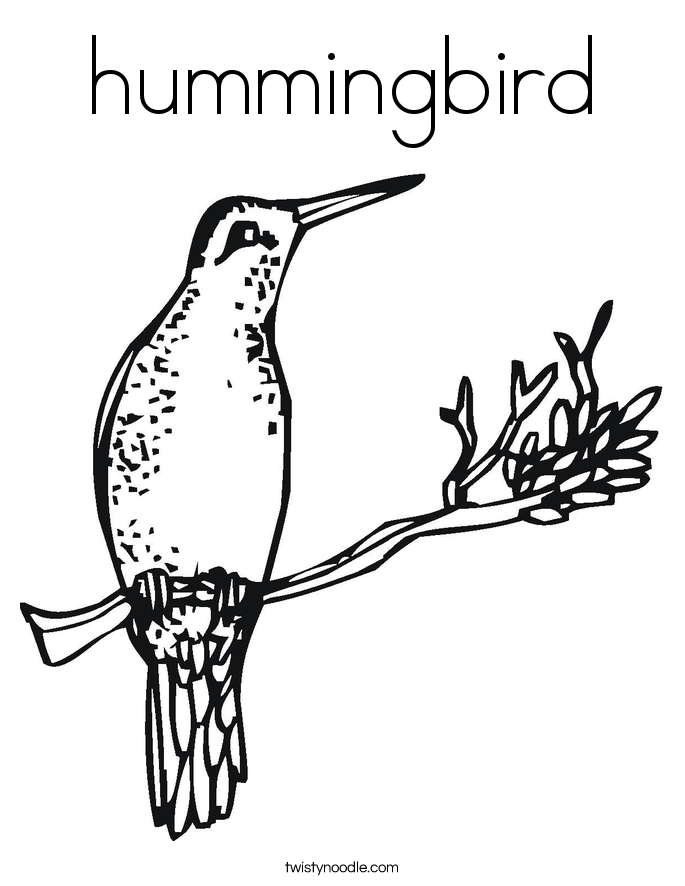 hummingbird Coloring Page Twisty Noodle