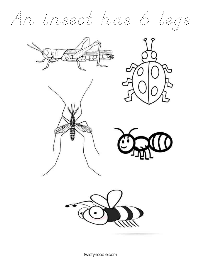 An insect has 6 legs Coloring Page