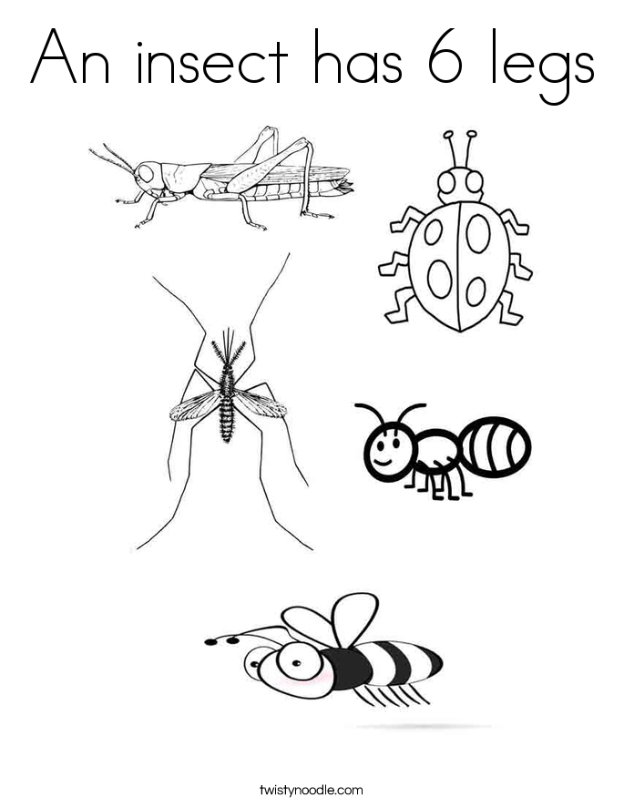An insect has 6 legs Coloring Page Twisty Noodle