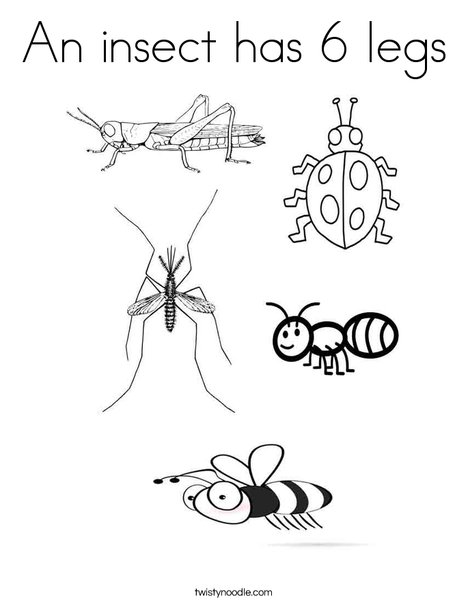 insects coloring page - Coloring Page Insect