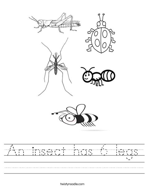an insect has 6 legs worksheet twisty noodle. Black Bedroom Furniture Sets. Home Design Ideas