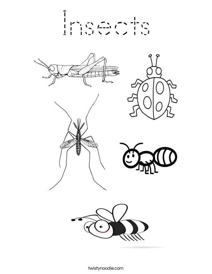 Insects Coloring Page Tracing