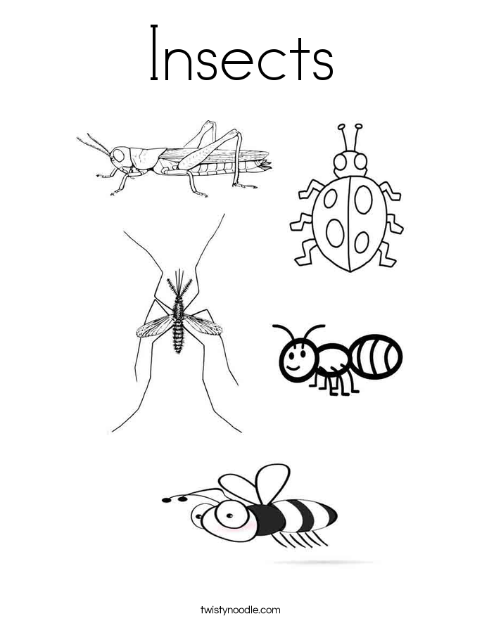 Charmant Insects Coloring Page.