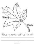 The parts of a leaf. Worksheet