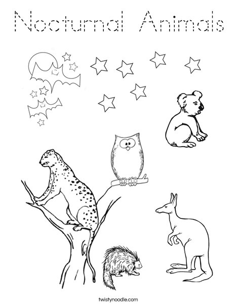 Nocturnal Animals Coloring Page