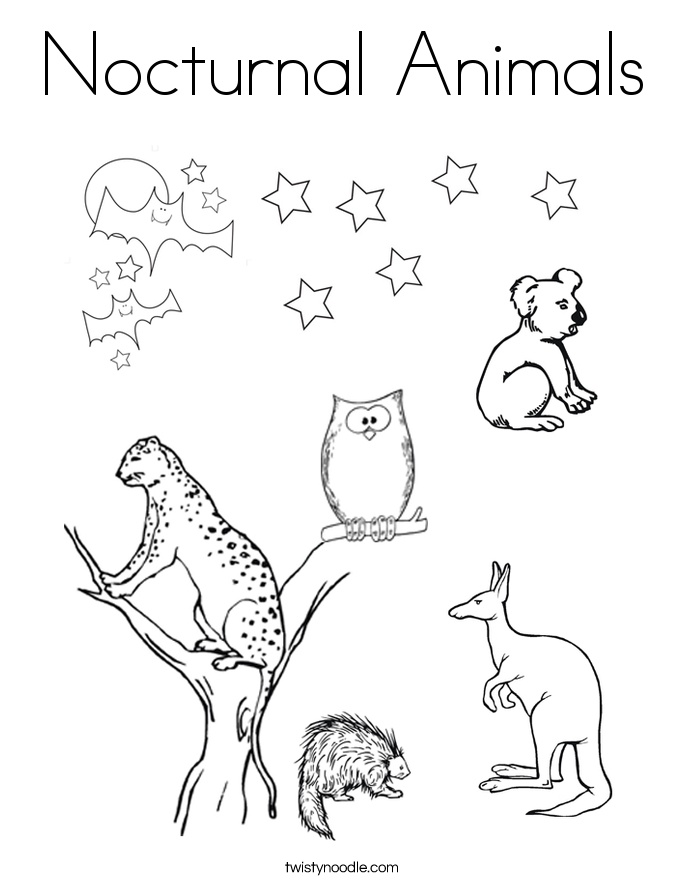 nocturnal animals coloring page - Outline Pictures Of Animals For Colouring