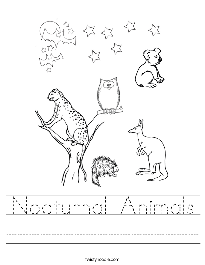 Nocturnal Animals Worksheet