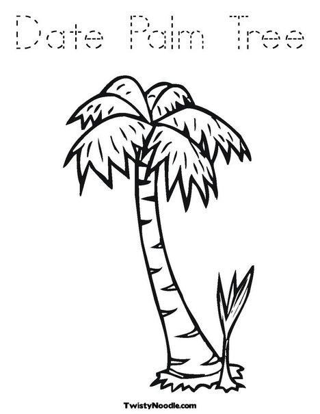 date palm tree fruit. island date palm tree