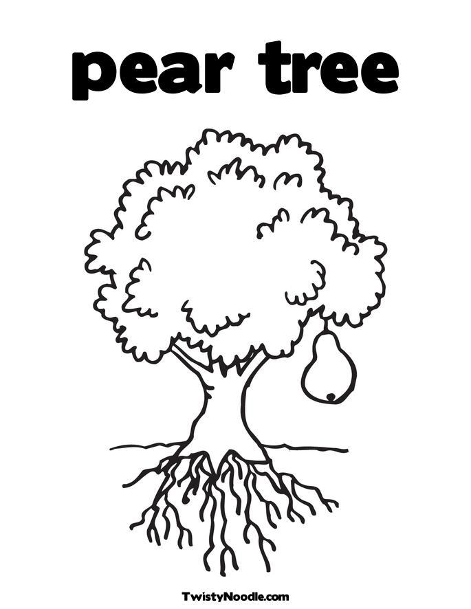 Pear Tree Coloring Page Pear Tree Coloring Page