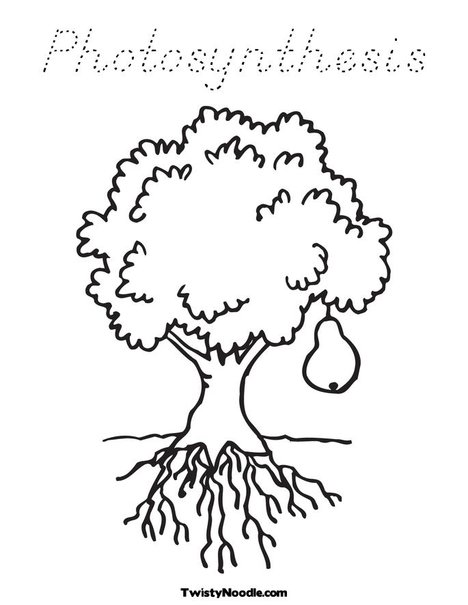 Photosynthesis Coloring Sheet