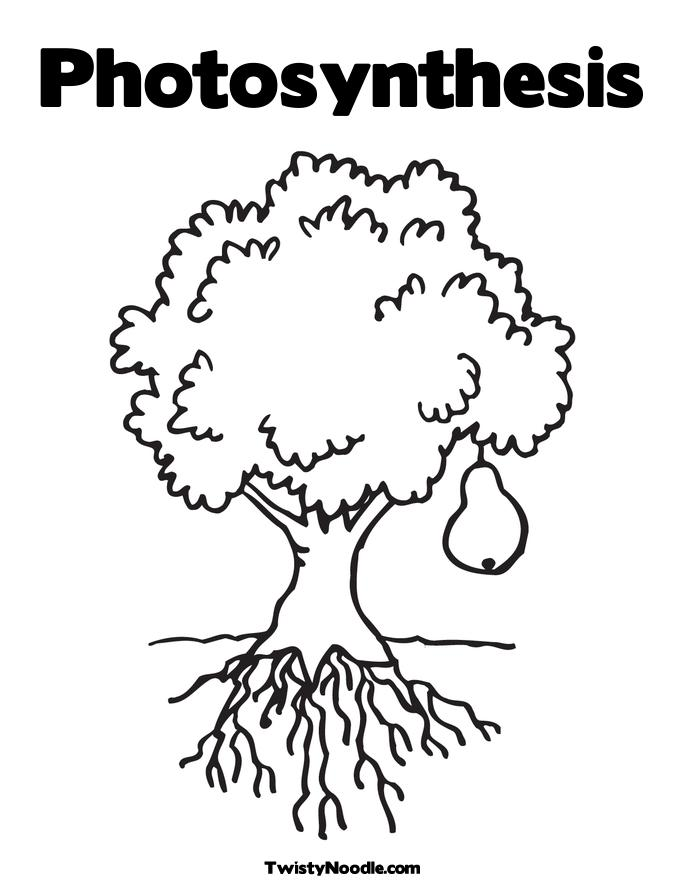 seed germination coloring pages