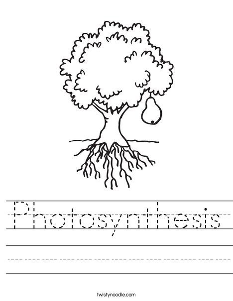 Photosynthesis &amp- Chloroplast Diagram Labeling Worksheet by A-Thom ...