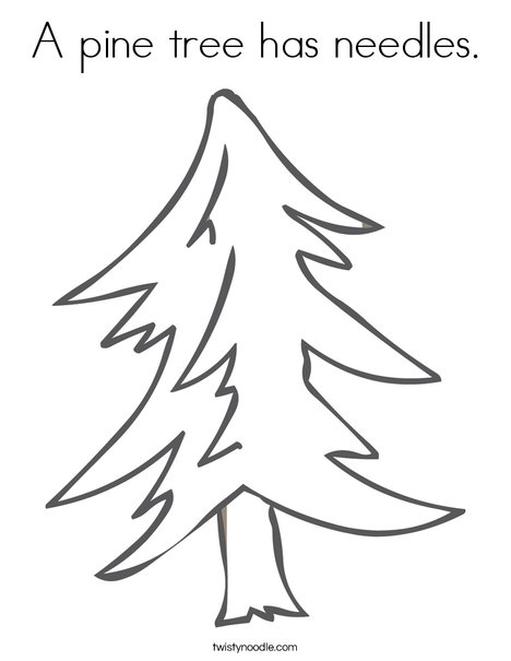 A pine tree has needles Coloring Page Twisty Noodle