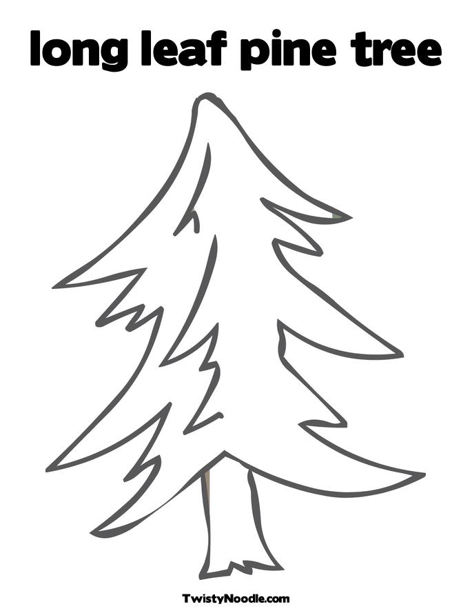 Long Leaf Pine Tree Coloring Page Twisty Noodle International Tree Coloring Page