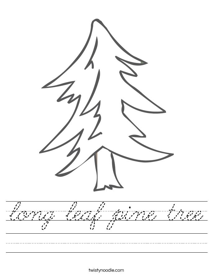 long leaf pine tree Worksheet
