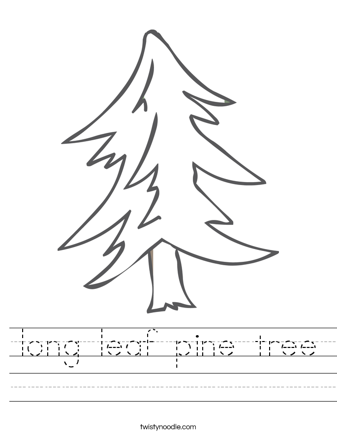 long leaf pine tree Worksheet