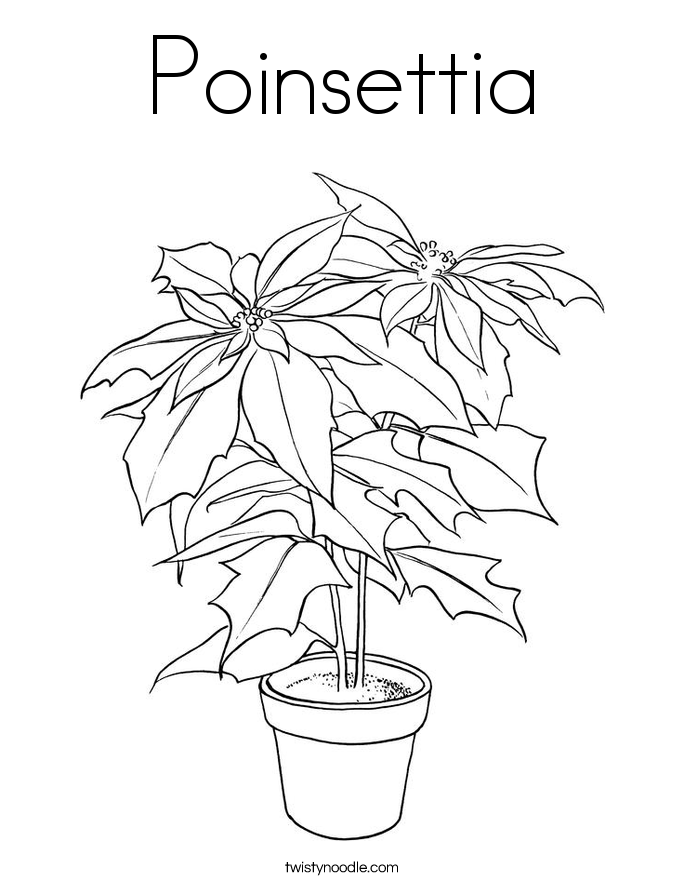 poinsettia coloring page twisty noodle