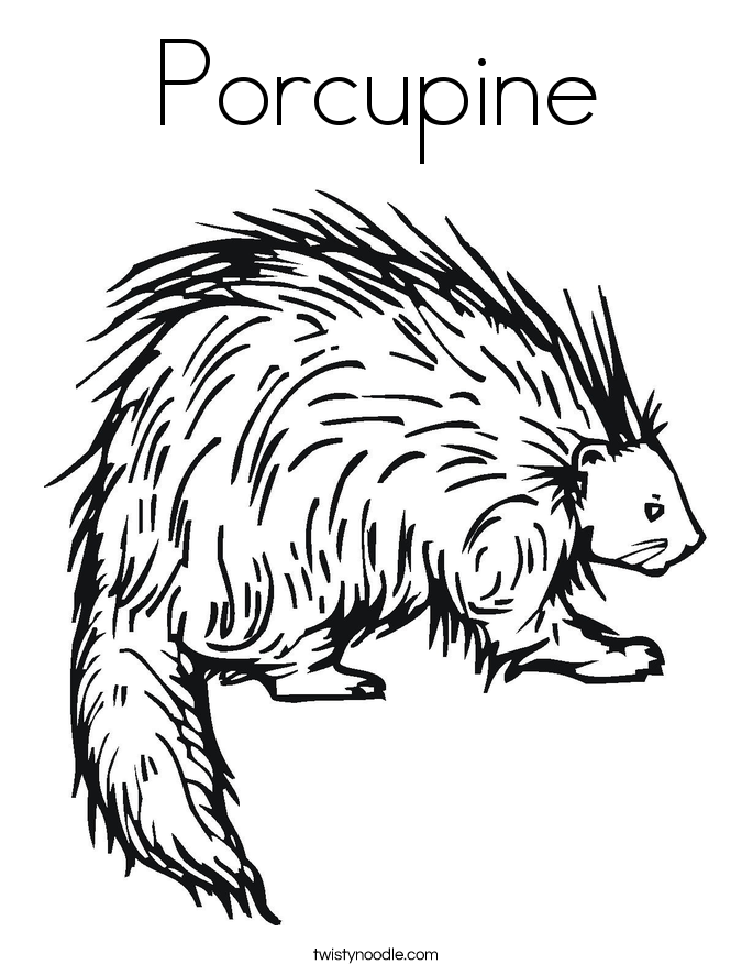 Porcupine Coloring Page Twisty Noodle